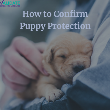 How to Confirm Puppy Protection