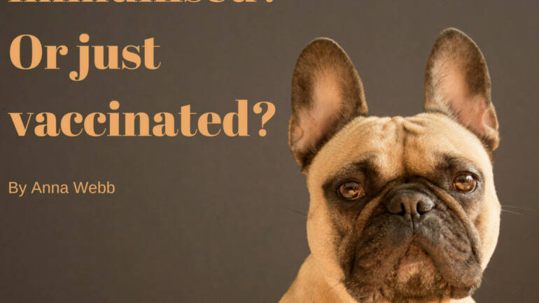 Is your dog immunised? Or just vaccinated?