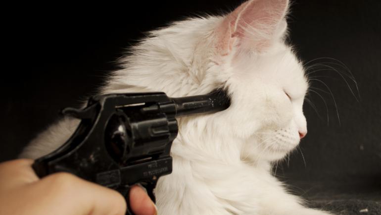 How to Avoid FIP in Your Cat