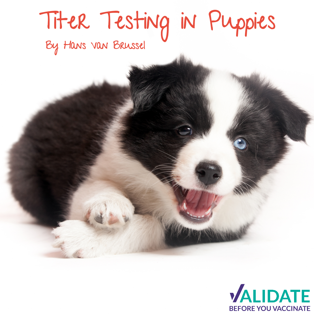 Titer Testing in Puppies