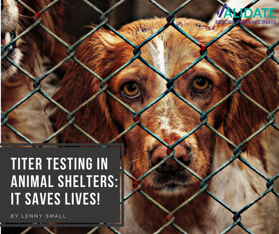 Titer Testing in Animal Shelters: It Saves Lives!