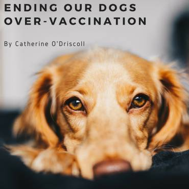Ending our dogs over-vaccination