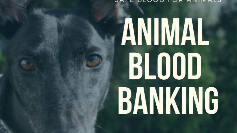 Animal Blood Banking