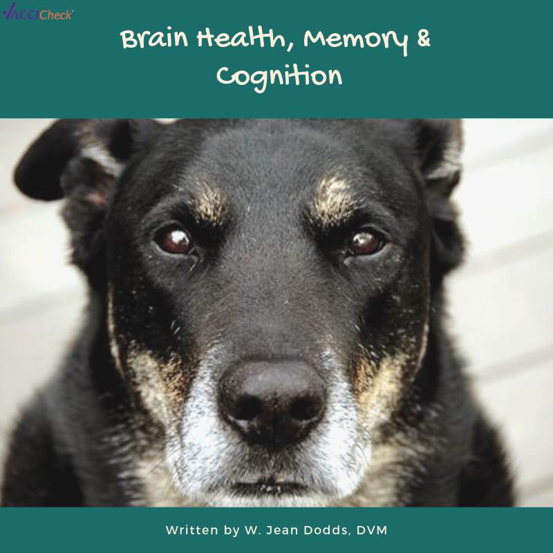 Brain Health, Memory & Cognition
