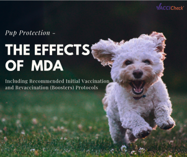 Pup Protection – The Effects of Maternally Derived Antibody (MDA)