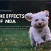 Pup Protection – The Effects of Maternally Derived Antibody (MDA) prueba 2 blog