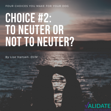 Four choices you make for your dog – Choice number two: To neuter or not to neuter?