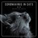 Coronavirus in Cats