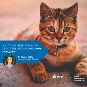 What You Need to Know About Feline Coronavirus (FCoV/FIP)