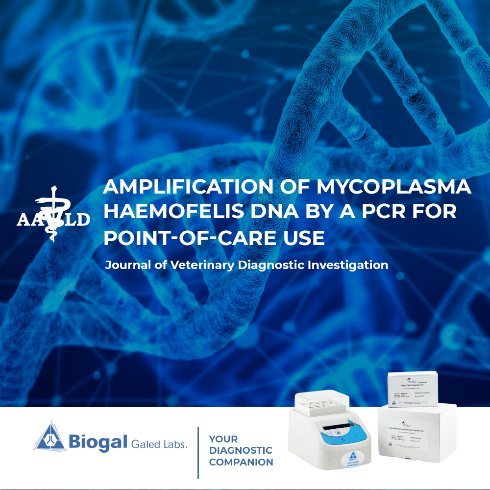Amplification of Mycoplasma Haemofelis DNA by a PCR for point-of-care use