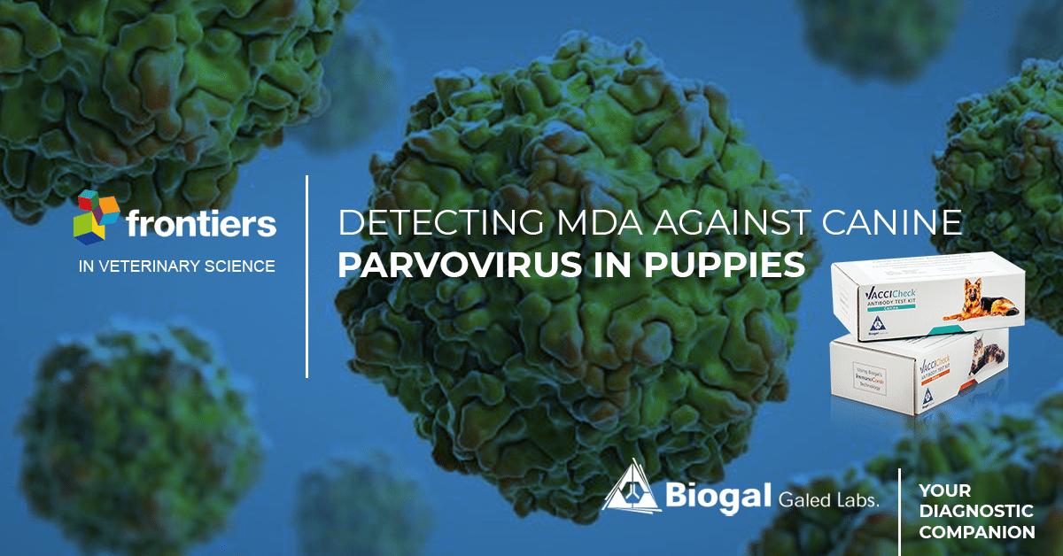 detecting MDA againts canine parvovirus