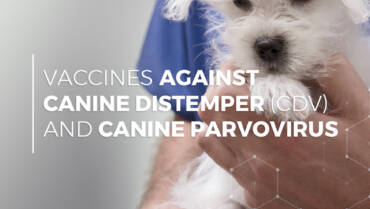 VacciCheck and the Role Antibodies Play in Response to CDV and CPV Vaccines in Dogs