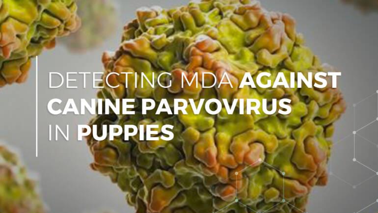 Detecting MDA Against Canine Parvovirus in Puppies