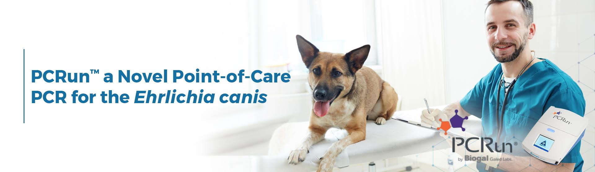 PCRun a Novel Point-of-Care PCR for the Ehrlichia canis