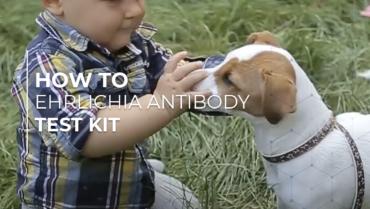 Ehrlichia Antibody Test Kit – ImmunoComb