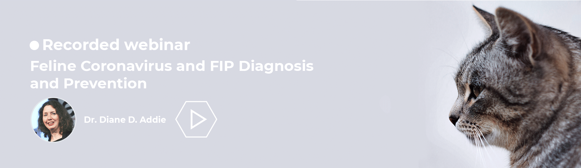 Feline Coronavirus and FIP Diagnosis and Prevention