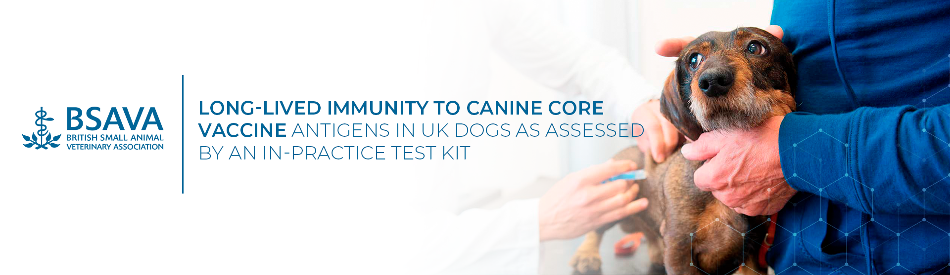 Long-lived immunity to canine core vaccine antigens in UK dogs
