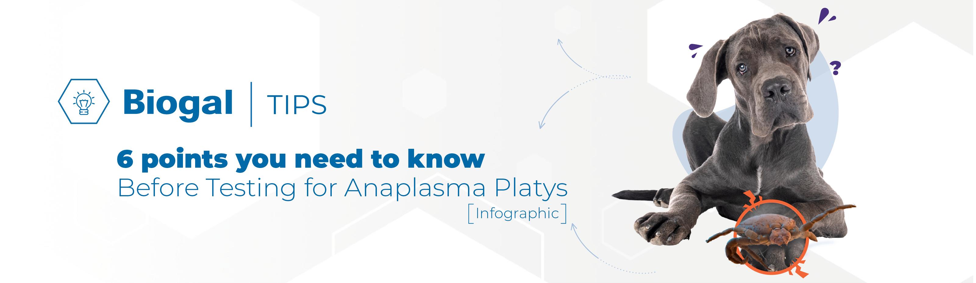 Biogal tips anaplasma platys